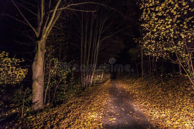 Chemin allumé avec les feuilles tombées la nuit image libre de droits