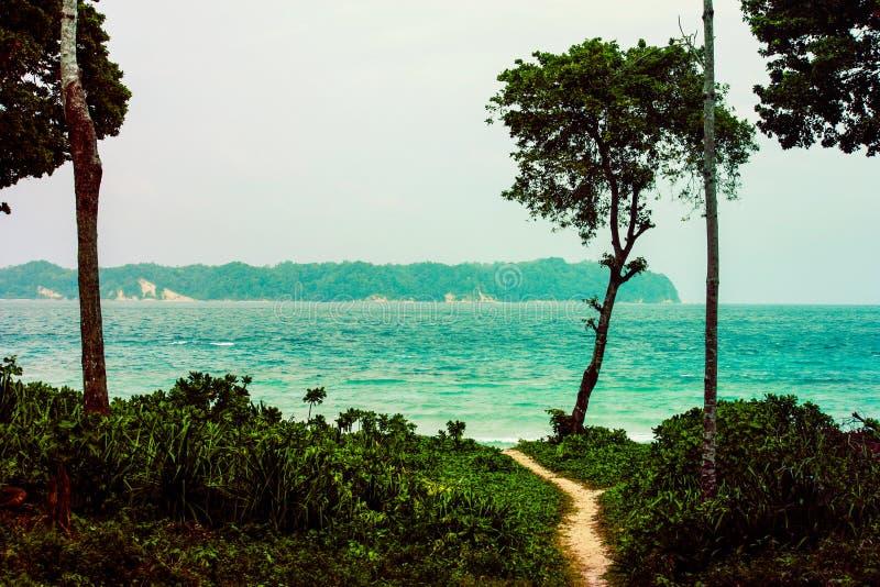 Chemin au milieu de la forêt vers la plage photographie stock libre de droits