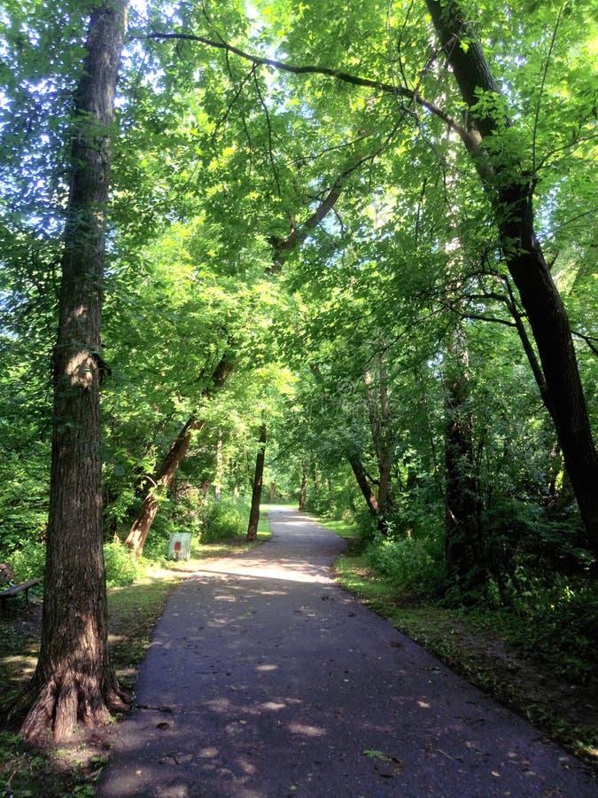 Chemin au paradis - verdure d'or photographie stock