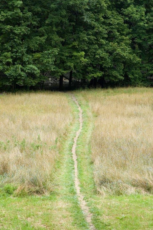 Chemin aux bois image libre de droits