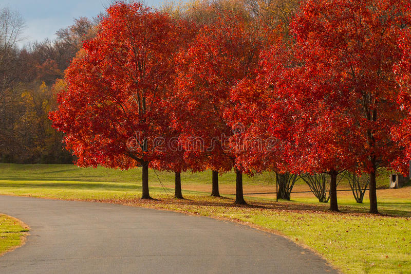 Chemin avec Autumn Trees images stock