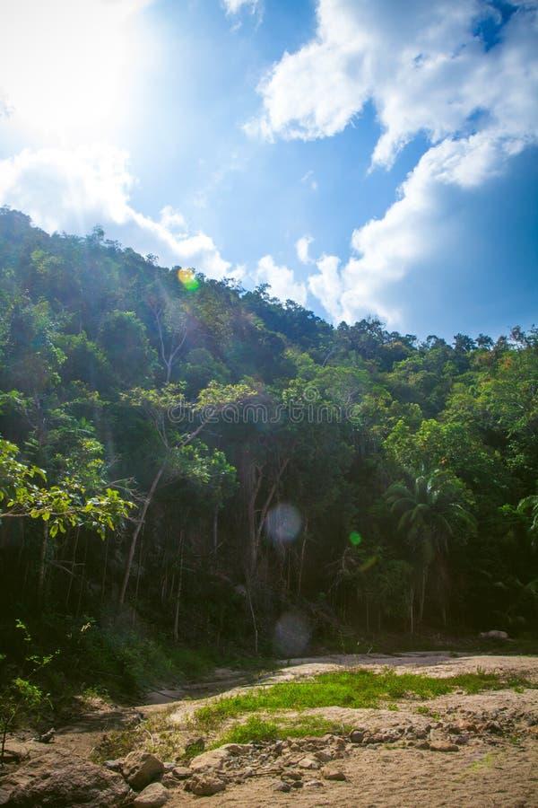 Chemin avec des paumes en KOH de la Thaïlande de forêt de jungle image libre de droits