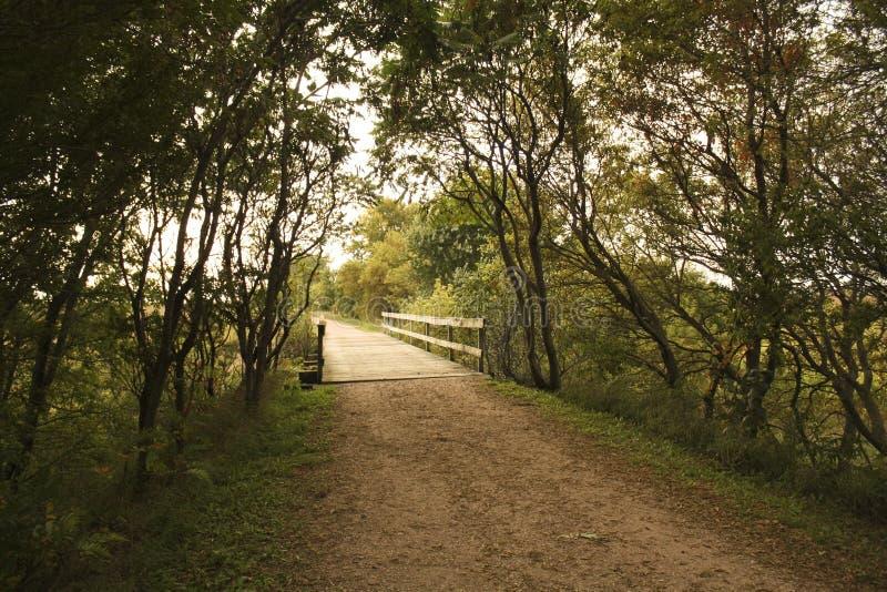 Chemin avec la photo de pont image libre de droits