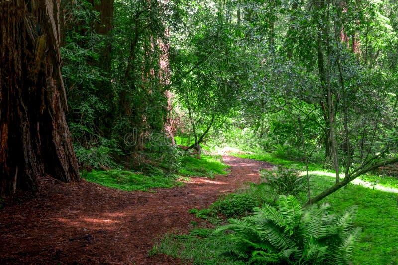 Chemin battu menant autour de la courbure et dans la forêt photos stock