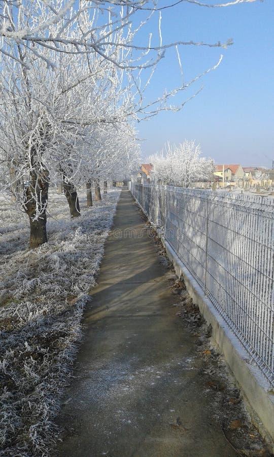 Chemin blanc d'hiver image libre de droits