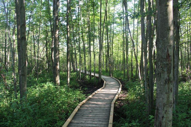 Chemin boisé à travers une forêt photo stock