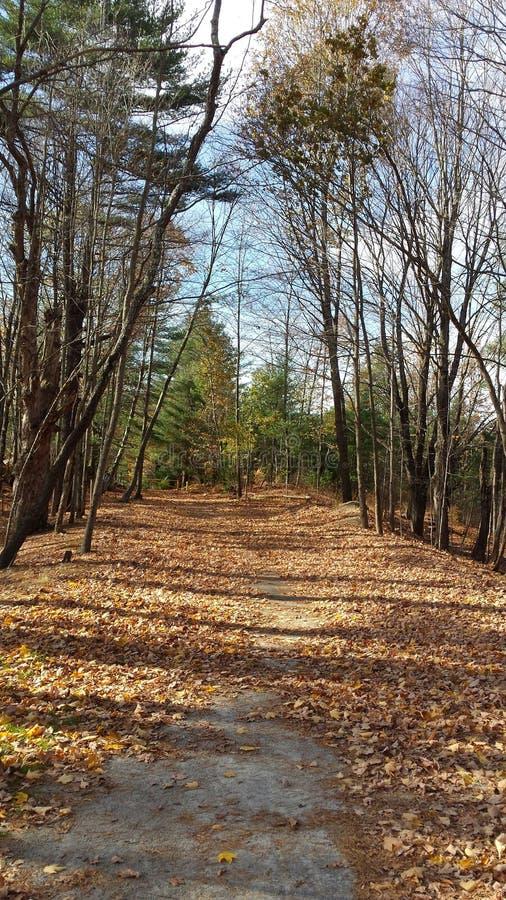 Chemin boisé photo libre de droits