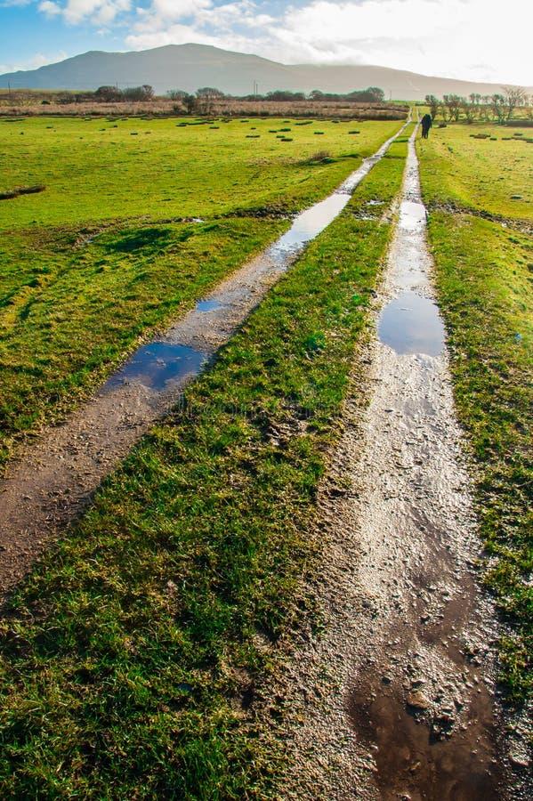 Chemin boueux croisant les pâturages verts de moutons photographie stock