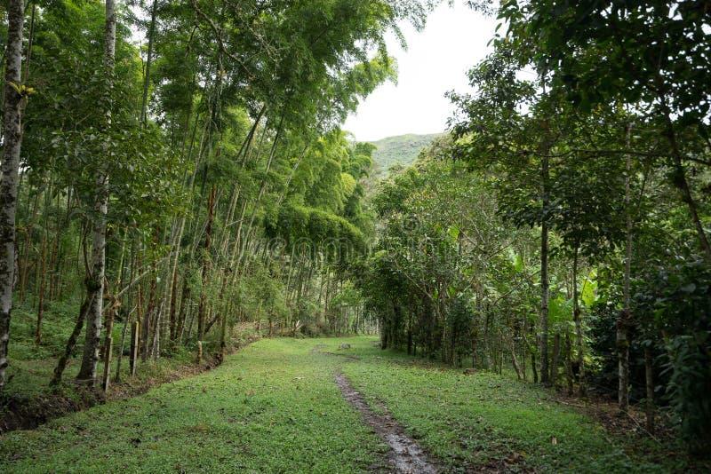 Chemin boueux dans la jungle photos stock
