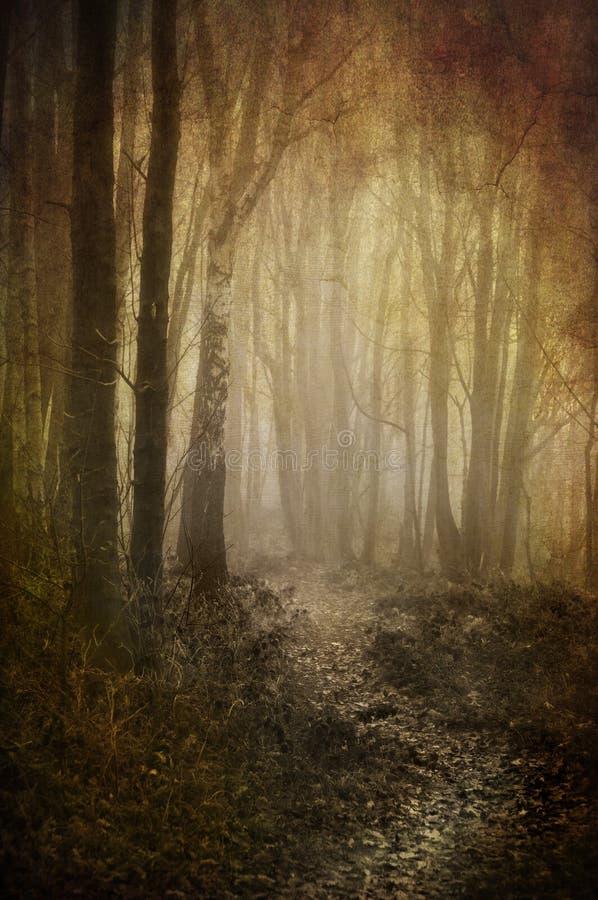 Chemin brumeux de régfion boisée photographie stock