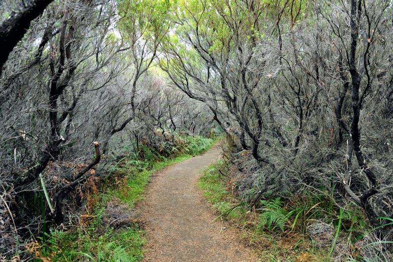 Chemin caché en parc national d'Otway de cap photos stock