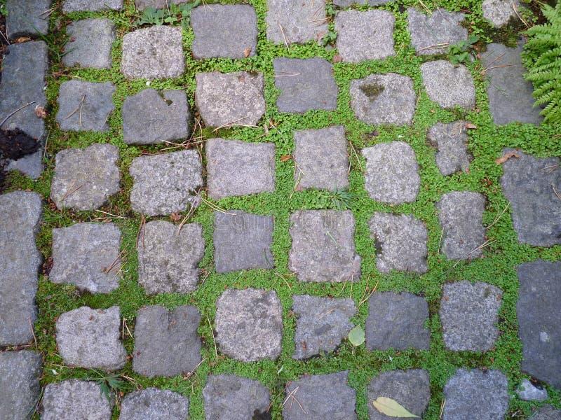 Chemin carré de brique photos libres de droits