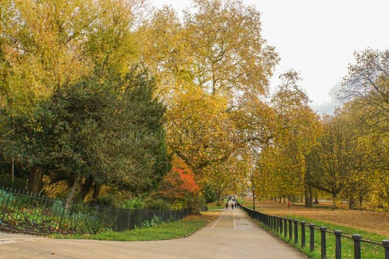 Chemin concret le long de l'arbre en parc public en automne photographie stock libre de droits