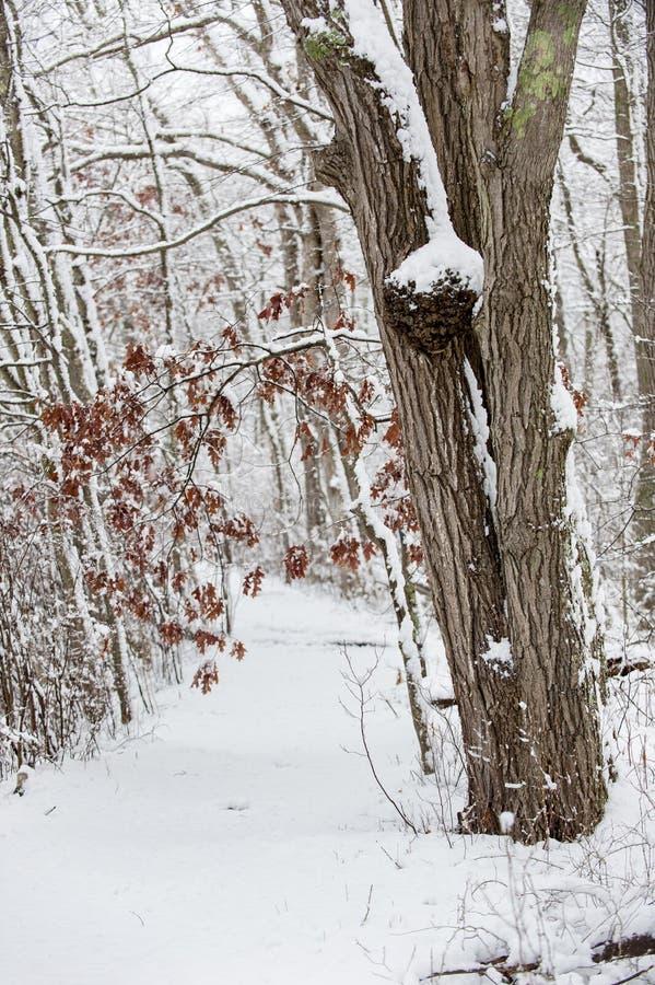 chemin couvert de neige à travers des bois photos stock