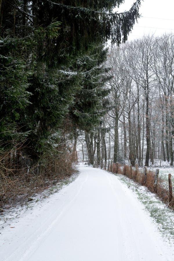 Chemin couvert de neige entourée par les arbres rougeâtres par automne Horizontal de l'hiver photographie stock libre de droits