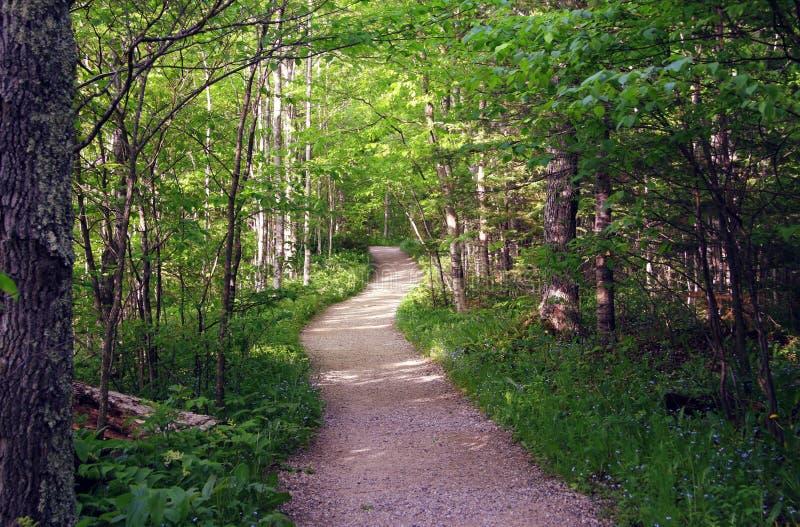 Chemin d'été en bois photographie stock