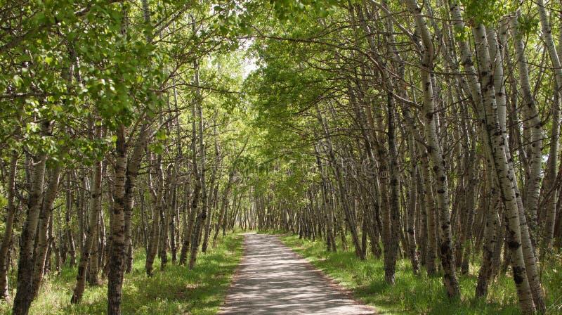 Chemin d'arbre photographie stock libre de droits