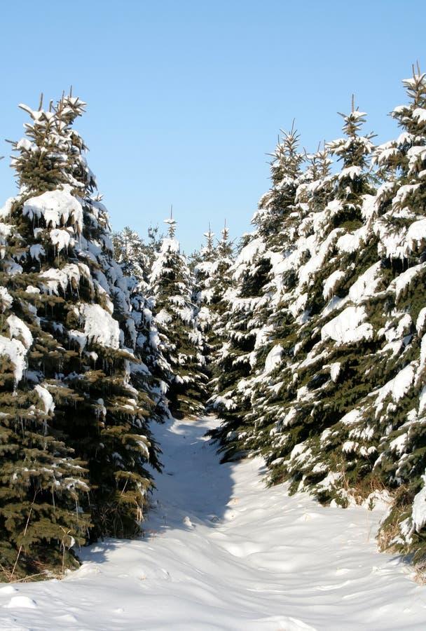 Chemin d'arbre de Milou photos stock