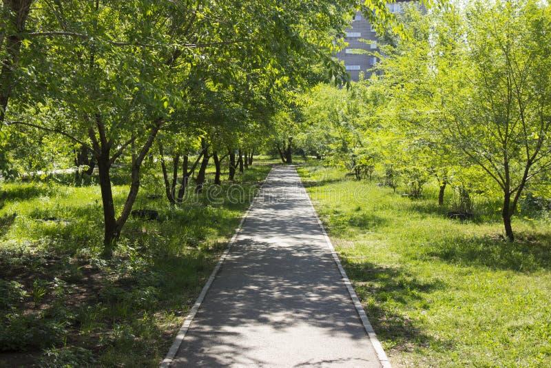 Chemin d'asphalte en parc de ville images stock