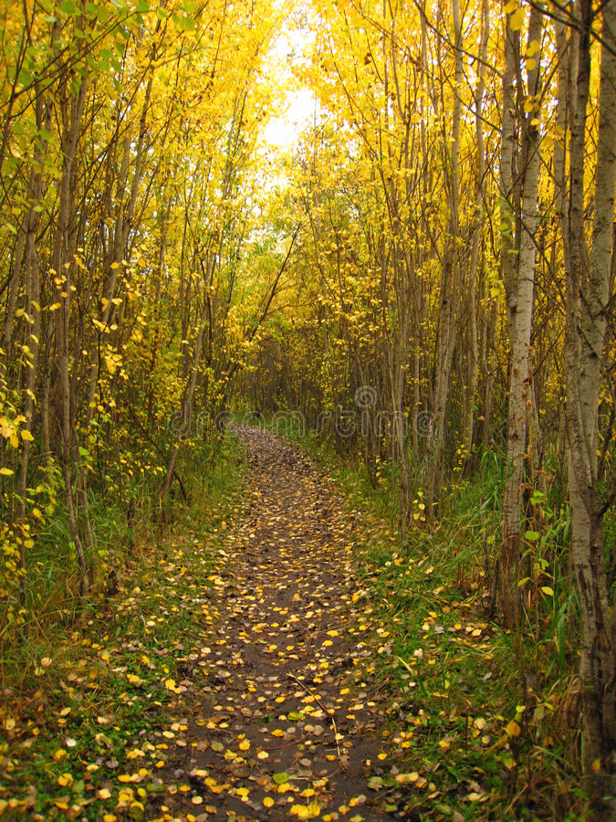 Chemin d'or d'automne images stock