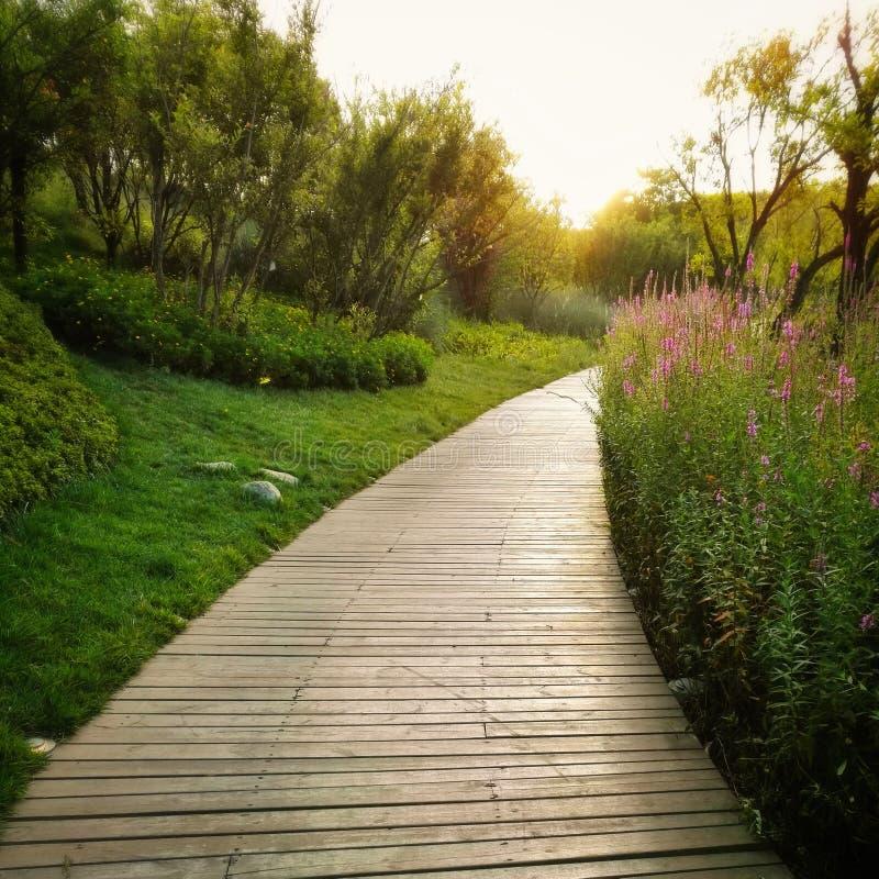 Chemin d'or de parc photo libre de droits
