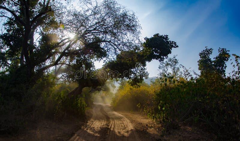 Chemin d'Enlighted photographie stock libre de droits