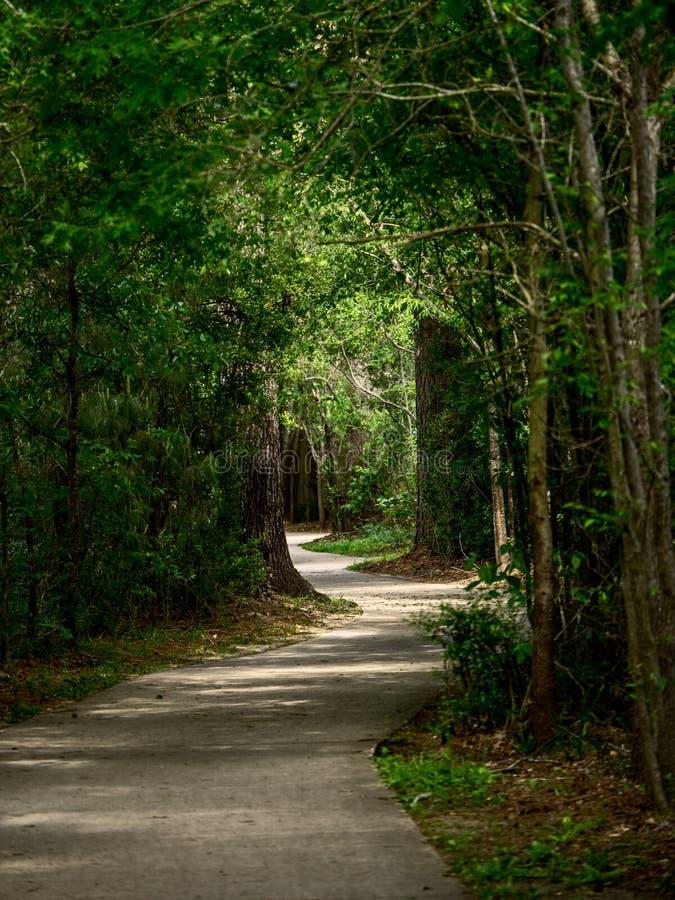 Chemin d'enroulement à travers les bois photo stock