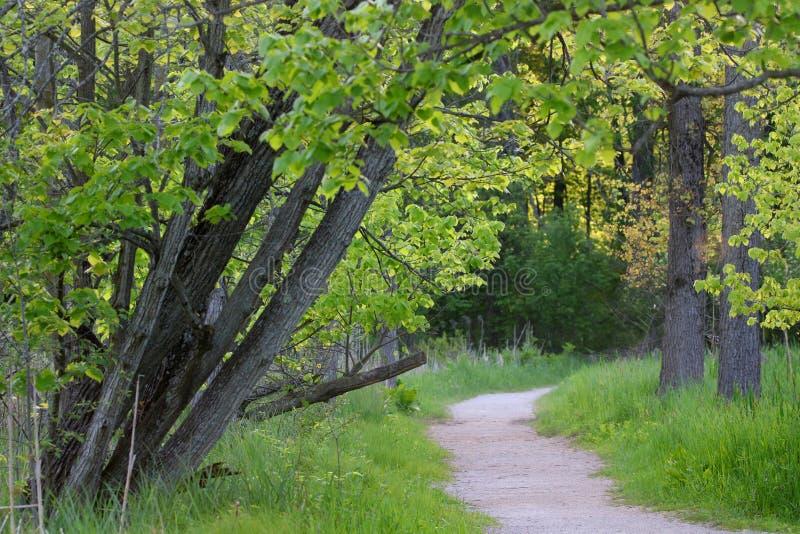 Chemin d'enroulement en parc naturel image libre de droits