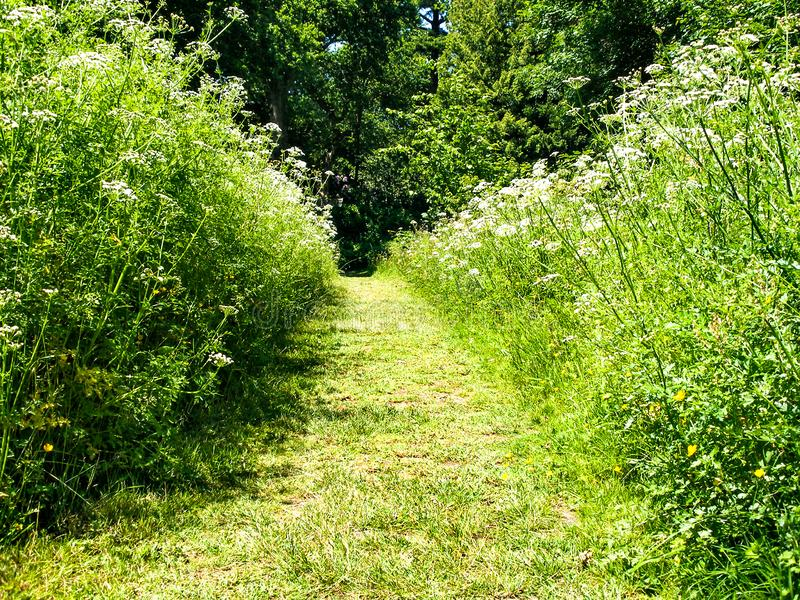 Chemin d'herbe photographie stock