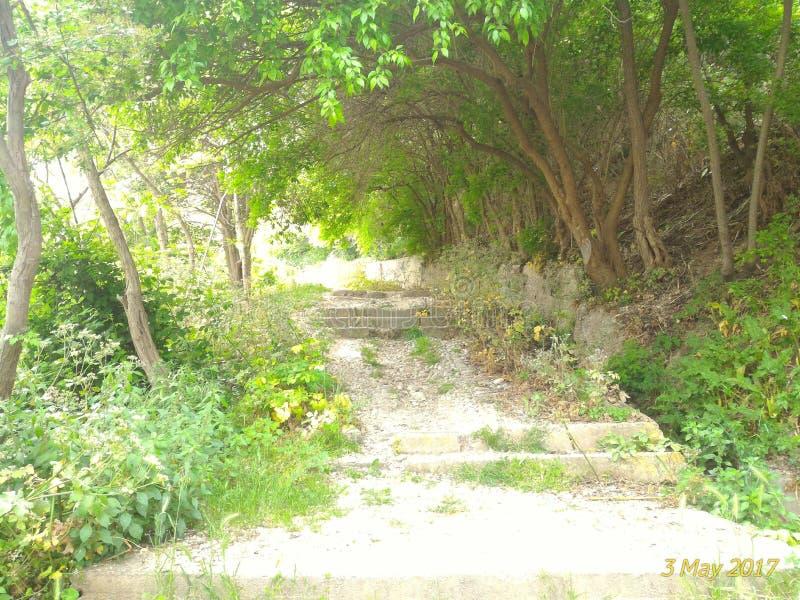 Chemin dans des bois photos libres de droits