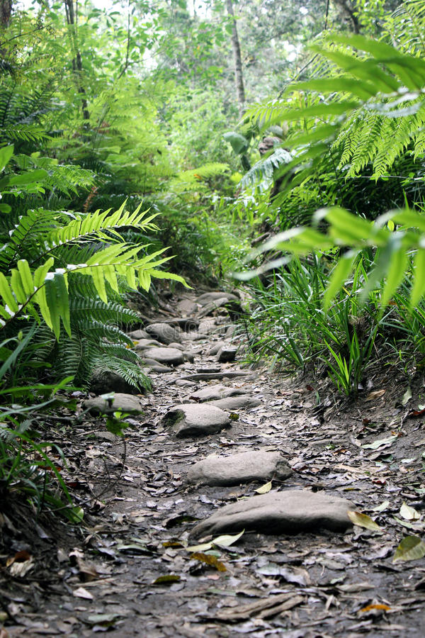 Chemin dans Fern Forest images stock