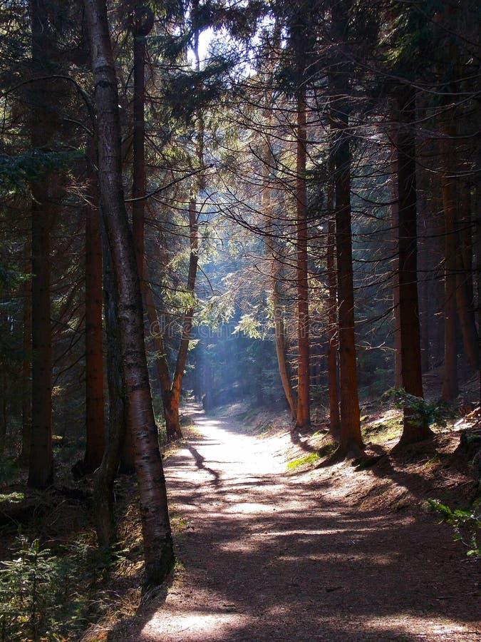 chemin dans la forêt photos libres de droits