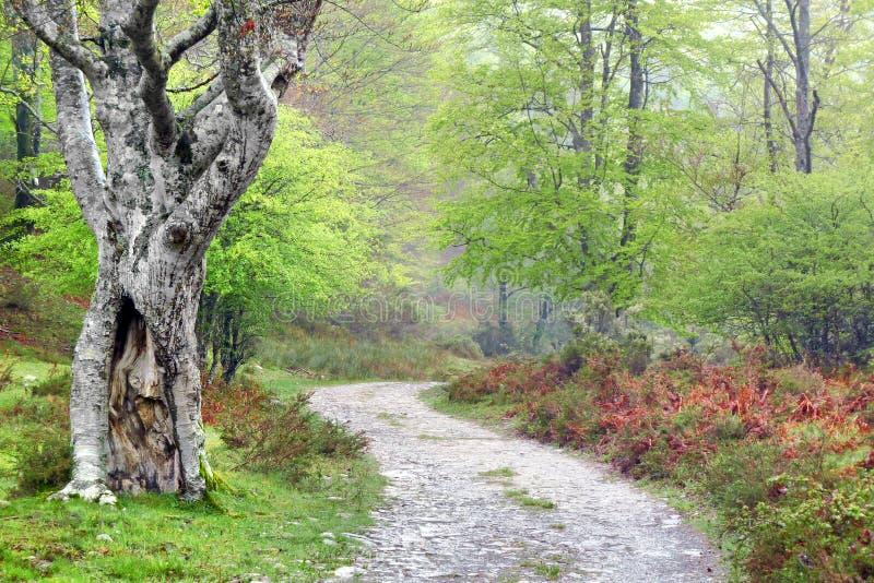 Chemin dans la forêt au printemps photos libres de droits