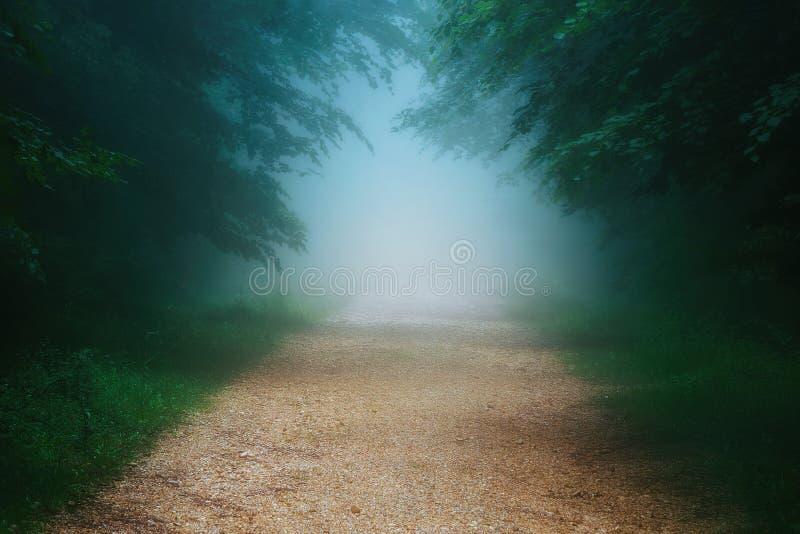 Chemin dans la forêt brumeuse image stock