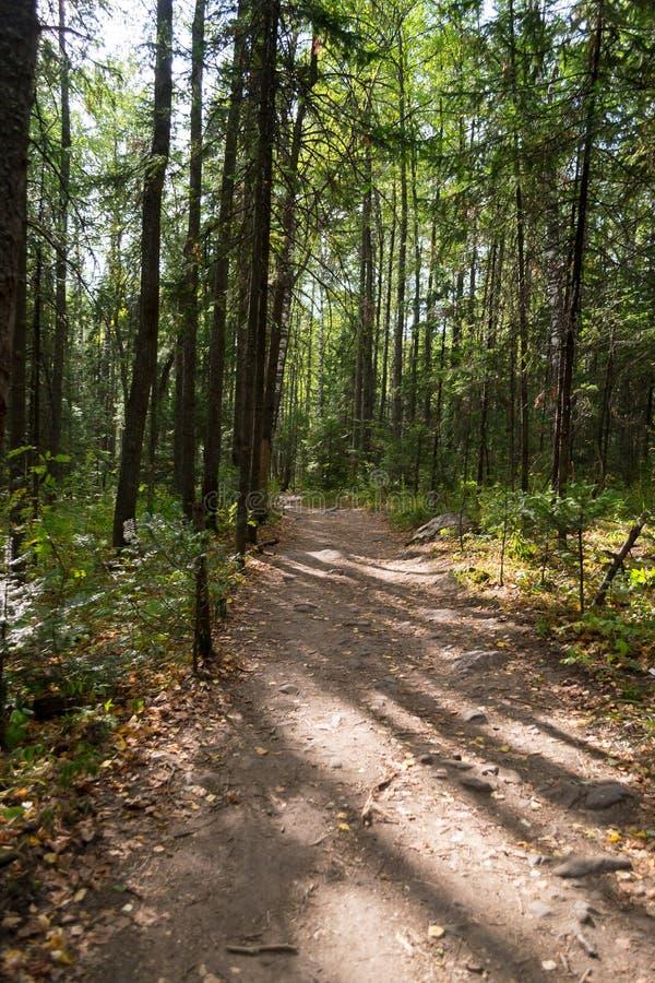 Chemin dans la forêt d'été images libres de droits