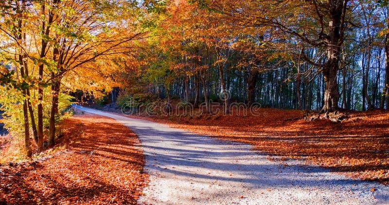 Chemin dans la forêt d'automne image stock