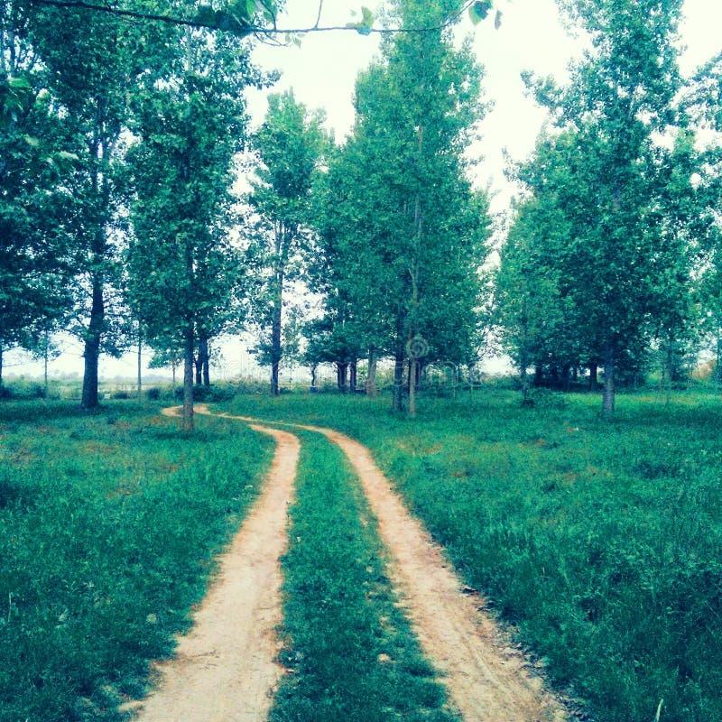 Chemin dans la forêt de rive photo libre de droits