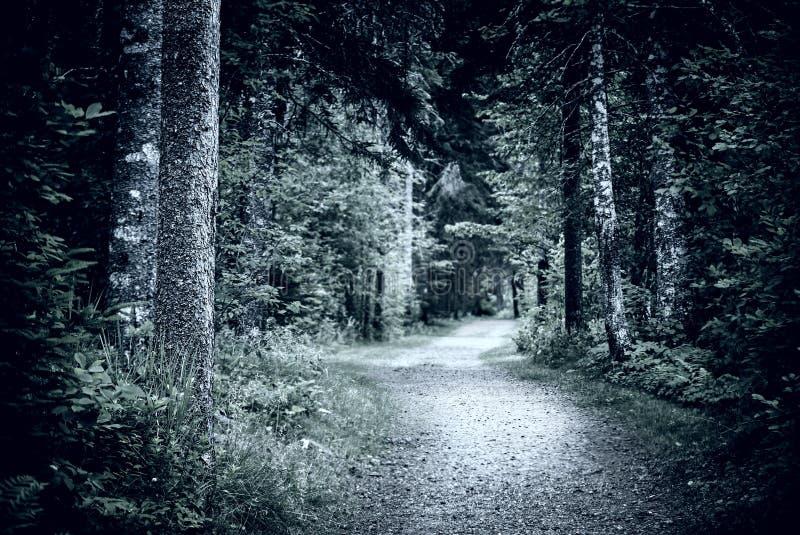 Chemin dans la forêt foncée de nuit photo libre de droits