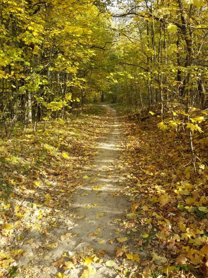 Chemin dans la for?t d'automne image stock
