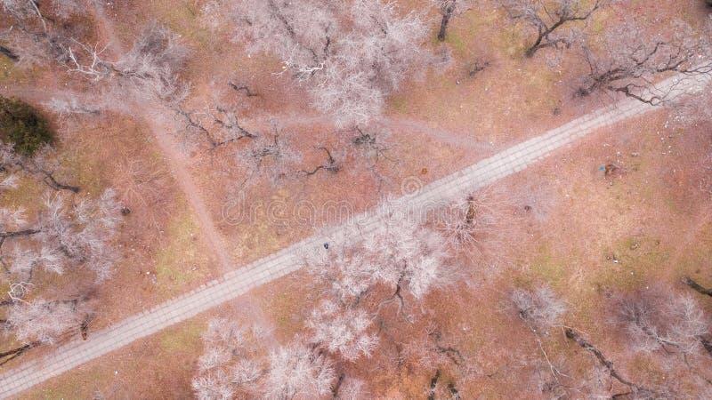 Chemin dans le parc au milieu des arbres photographie stock