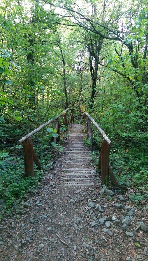 chemin dans les bois, à où il mène photographie stock