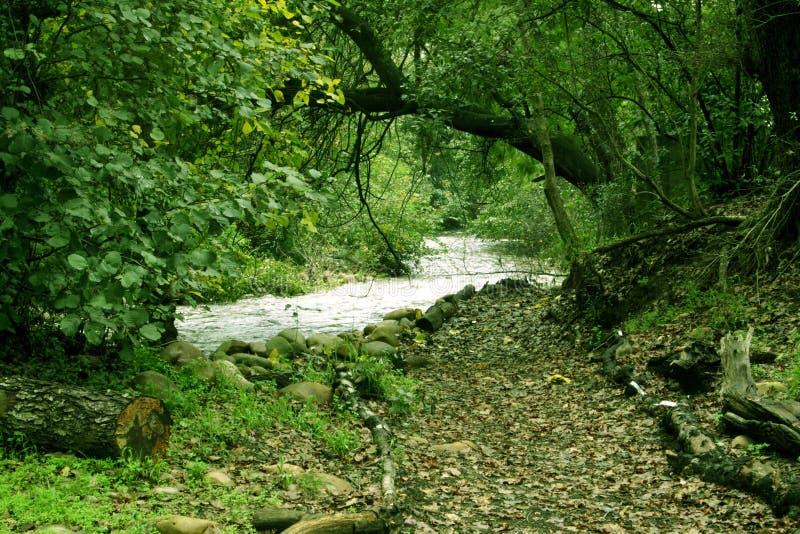 Chemin dans les bois image libre de droits