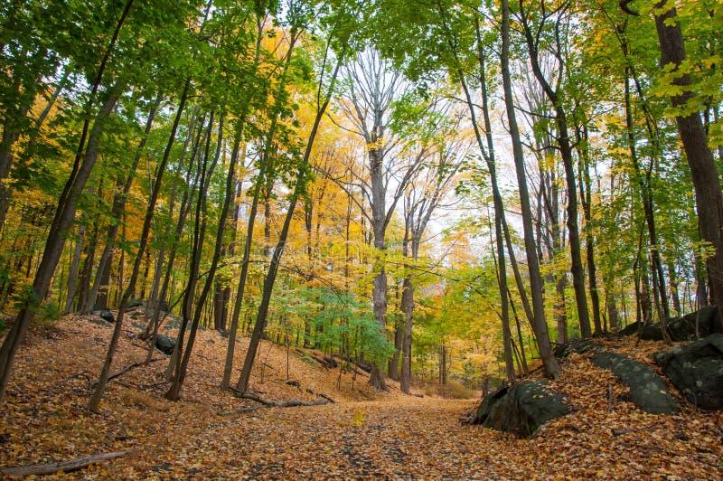 Chemin dans les bois avec le feuillage d'automne photos stock