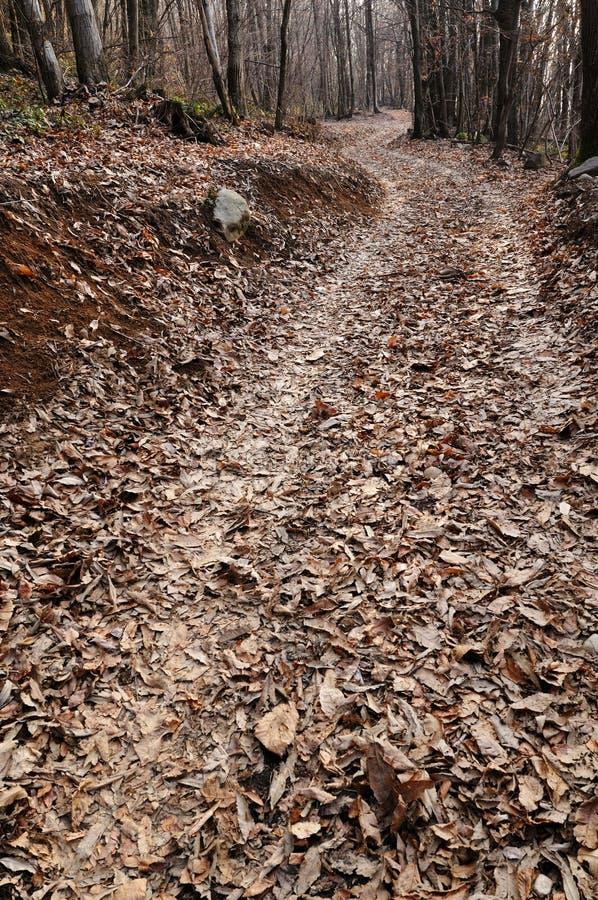 Chemin dans un bois de châtaigne en hiver tardif photographie stock libre de droits