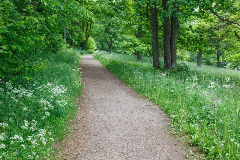 Sentier piéton dans le pré d'été images stock