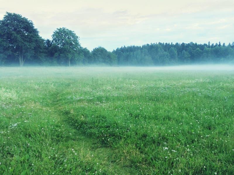 Chemin dans un pré vert brumeux images stock