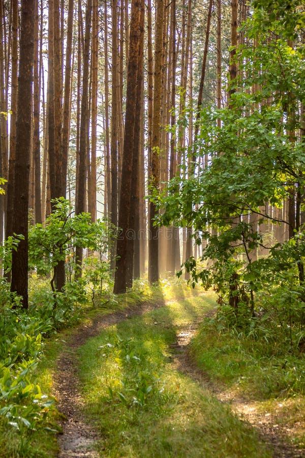 Chemin dans une forêt brumeuse images libres de droits