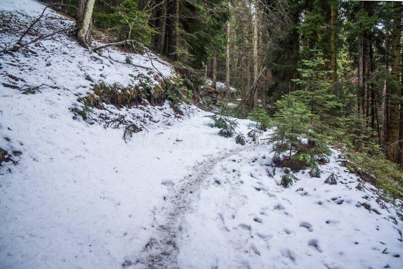 Chemin de bâche de neige en parc national de borjomi photo libre de droits