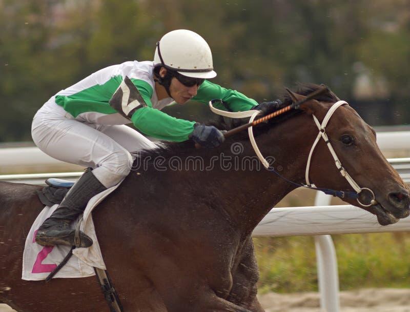 Chemin de cheval photo libre de droits