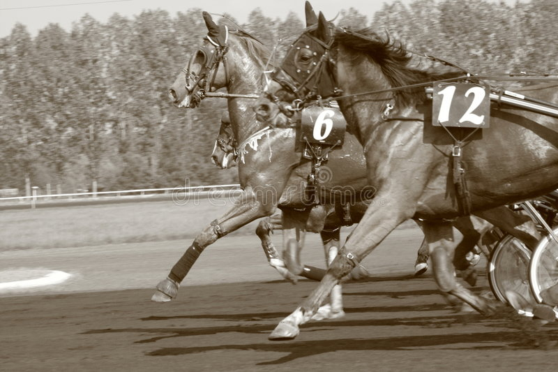 Chemin de cheval photos libres de droits